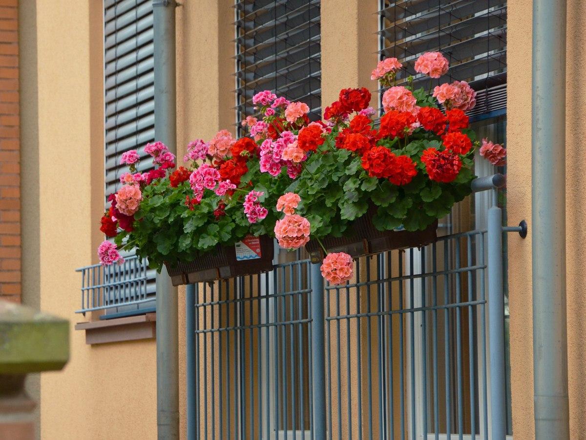 Какие цветы можно посадить на окне