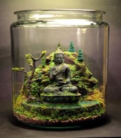 террариум с растениями